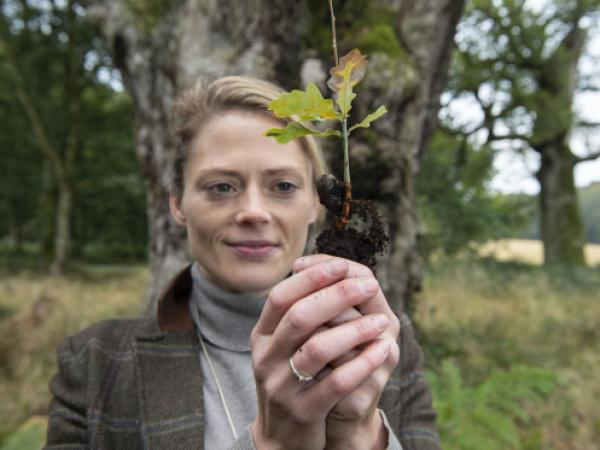 Tiny Acorns Continue Legacy of our Ancient Oaks