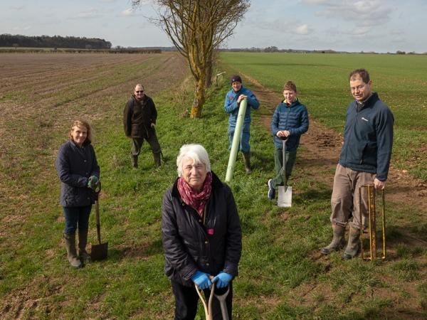 We've Donated Descendants of our Ancient Oaks to Volunteer Tree Stewards