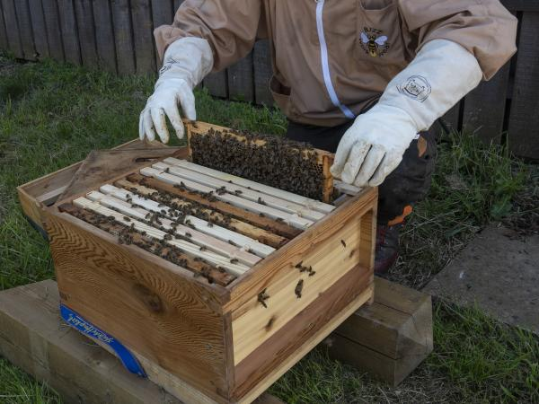 Queen Bee Attempts Palace Coup