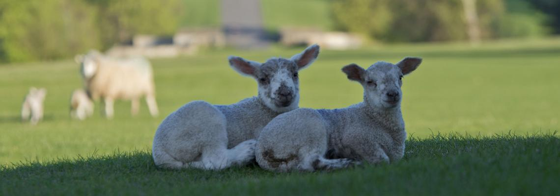 We're Offering a 'Dream' Role for Shepherd