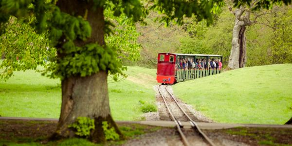 The Miniature Train