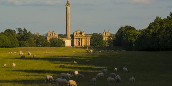 We're Supplying Lamb to One of Country's Oldest Family Butchers