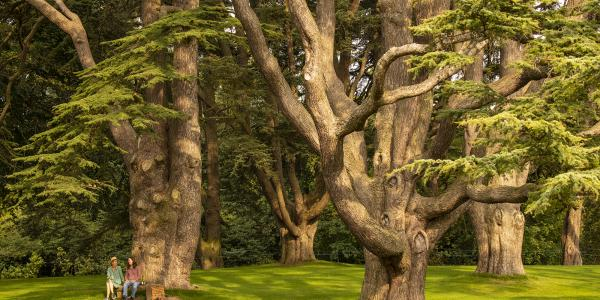 Park and Gardens Talks and Tours